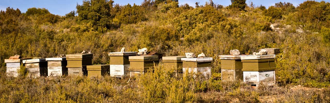 Ruta miel de La Alcarria - Guía Repsol de alimentos y bebidas