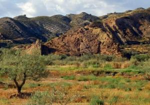 Ruta aceite de oliva del Bajo Aragón - Guía Repsol de alimentos y bebidas