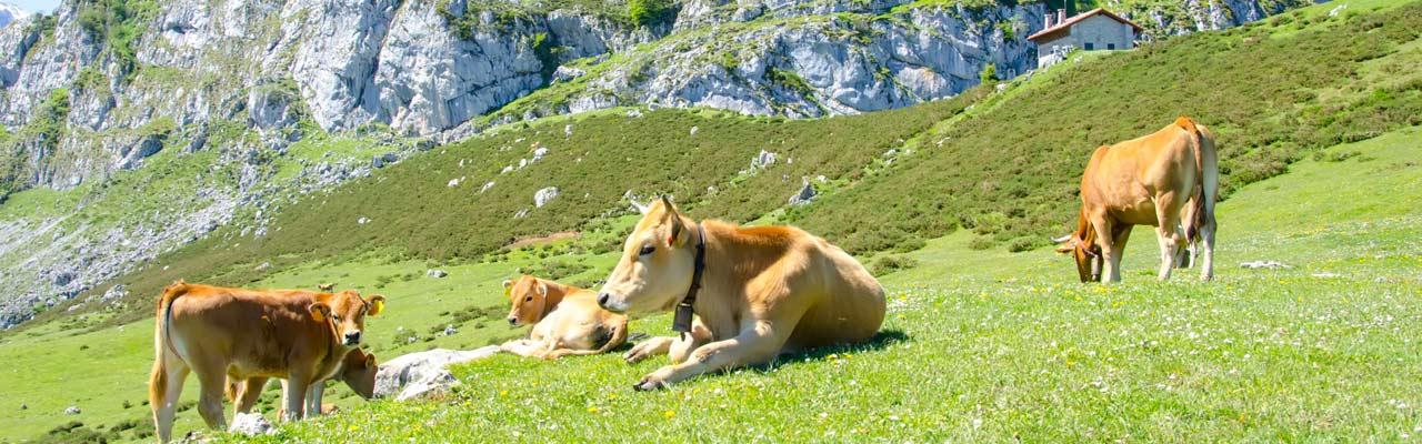 guia gastronomica de asturias: