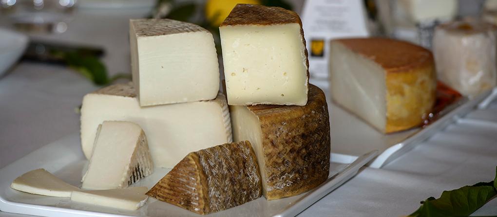Cata queso 2015