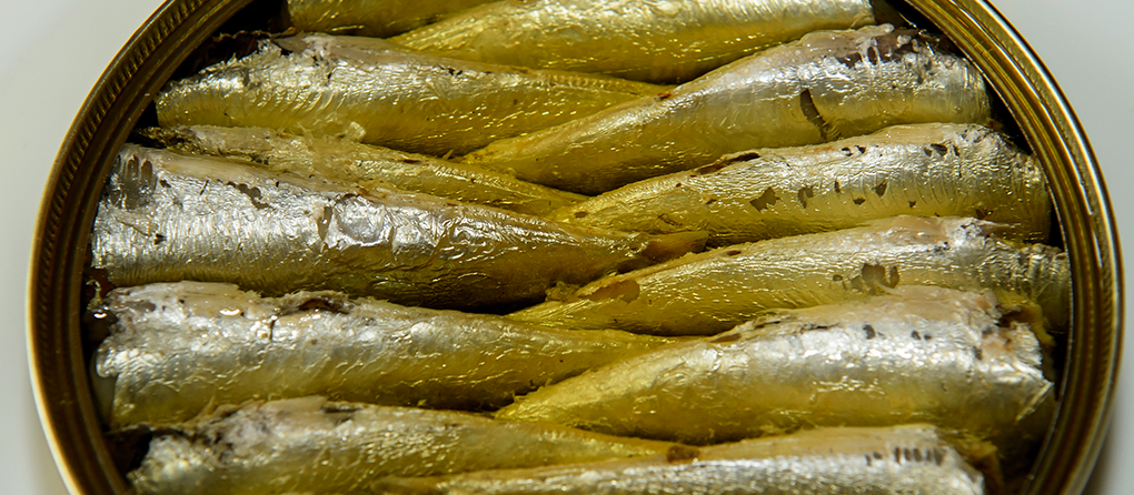 Cata conservas sardinas 2015