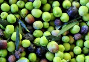 Aceite de oliva virgen extra Arbequina - Guía Repsol de alimentos y bebidas