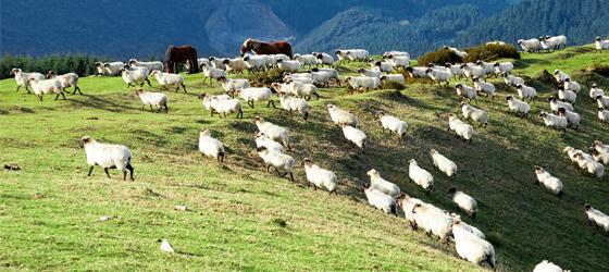 Del Alto de Otzaurte a Idiazábal
