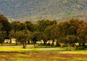 Ruta quesos de La Serena - Guía Repsol de alimentos y bebidas