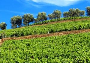Ruta vinos de la Ribera del Duero - Guía Repsol de alimentos y bebidas