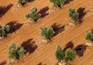 Ruta del aceite Montes de Toledo - Guía Repsol de alimentos y bebidas