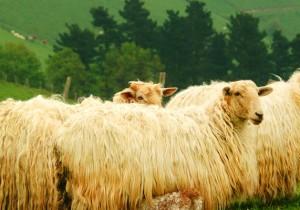 Sabores ancestrales del País Vasco