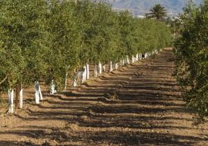 Ruta de los espirituosos de Alicante - Guía Repsol de alimentos y bebidas