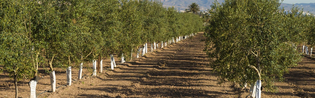 Ruta de los destilados de Alicante - Guía Repsol de alimentos y bebidas